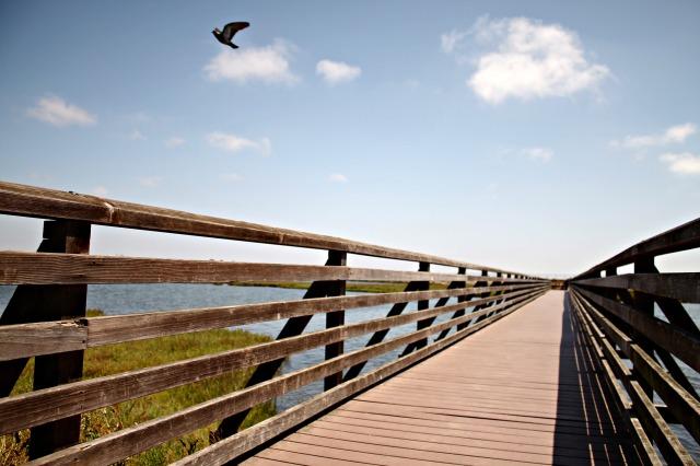 Bolsa Chica Wetlands Path